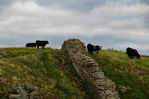 Hadrian wall, the Hadrian's Wall Walk, England  hiking trails
