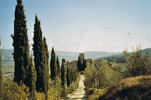 classic Tuscany image,  Florence and Siena, Toscana Italy hiking trails