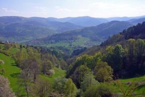on trail: hiking  trails Vosges France